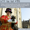 interesting jobs ravenmaster wtf fun facts