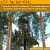 invisible tree house wtf fun facts