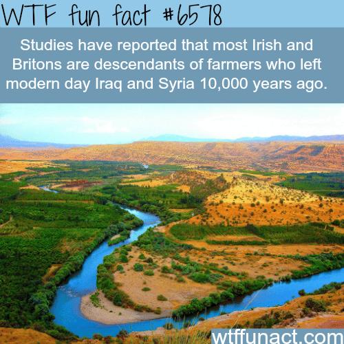 Irish and Britons ancestors - WTF fun facts