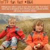 irish twins wtf fun facts