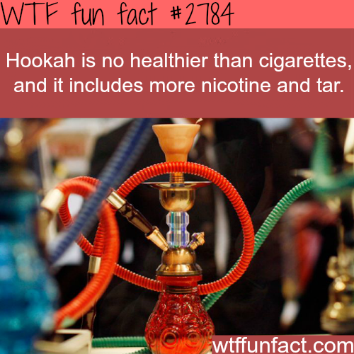 Is hookah healthier than cigarettes - WTF fun facts