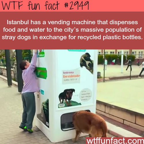 Istanbul's awesome vending machines for dogs -WTF fun facts