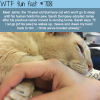 jamie the cat wtf fun facts