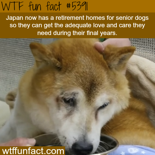 Japan now has retirement homes for dogs - WTF fun facts