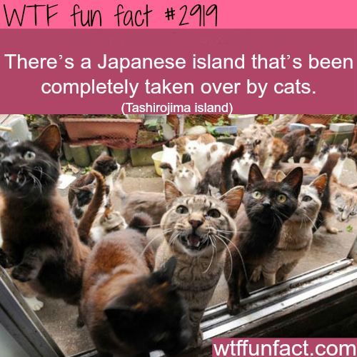 Japanese island full of cats -WTF fun facts