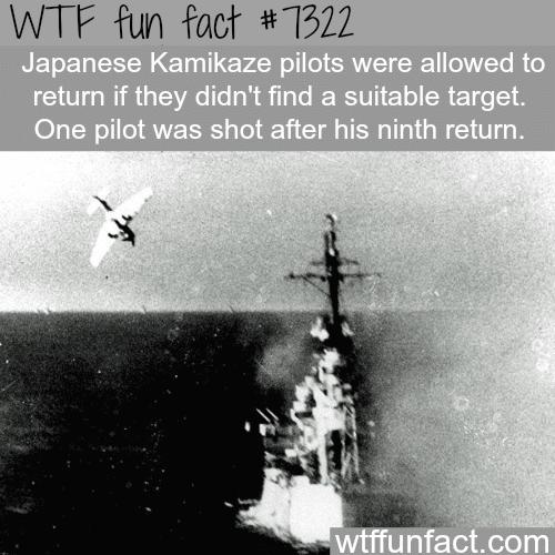 Japanese Kamikaze - WTF fun fact