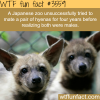japanese zoo tried to mate two male hyenas for four