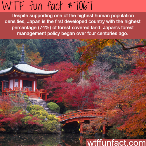 Japan's forests - WTF fun facts