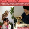 japans owl cafes wtf fun facts