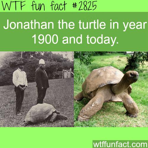 Jonathan the turtle -WTF fun facts