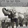 jumbo wtf fun facts