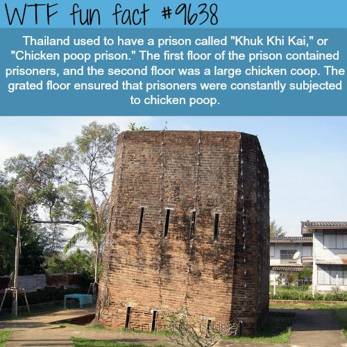 Khuk Khi Kai - WTF fun fact
