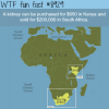 kidney prices in kenya wtf fun facts
