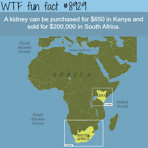 Kidney prices in Kenya - WTF fun facts