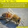killer bees wtf fun fact