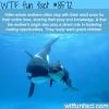 killer whale mothers really want grandchildren