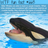 killer wtf fun facts