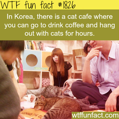 Korea's cats cafe - WTF fun facts