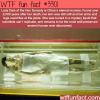 lady dais china s eternal mummy