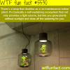 lamp that doubles as indoor plant wtf fun facts