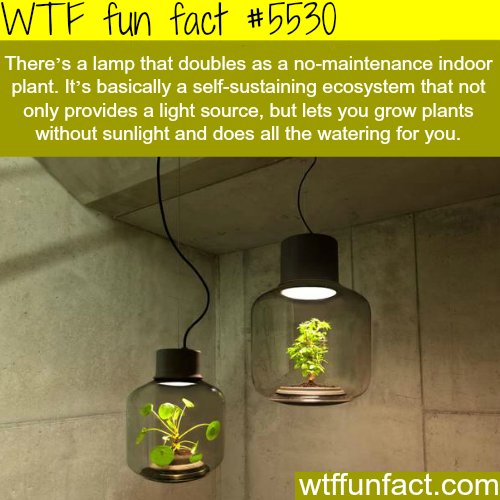 Lamp that doubles as indoor plant - WTF fun facts