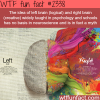 left brain vs right brain myth