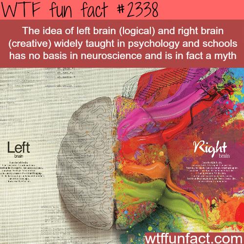 Left Brain VS Right Brain myth -WTF funfacts