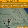 limestone wall in bolivia is home to over 5000