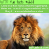 lions mane wtf fun fact