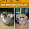 liquid cats wtf fun fact