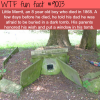 little merrits tomb