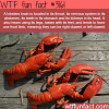 lobsters are one of the weirdest animals