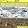 locusts problem in china 1960 wtf fun facts