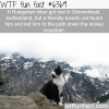 lost hiker gets help from a cat wtf fun facts
