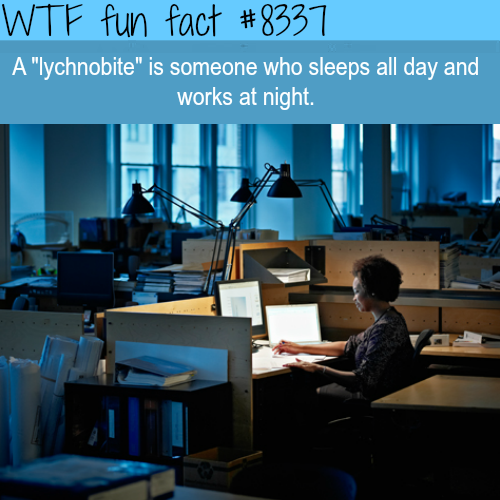 Lychnobite - WTF fun facts