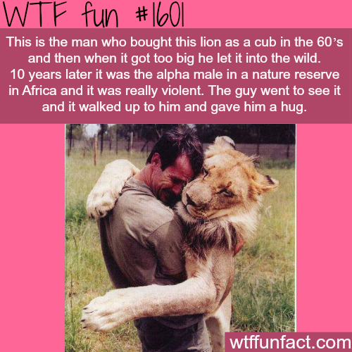 Man and Lion best friends -WTF fun facts