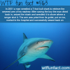 man fights 7 foot bull shark wtf fun facts