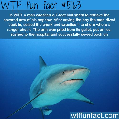 Man fights 7-foot bull shark - WTF fun facts