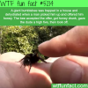 man gets a high five from a bee he saved wtf fun