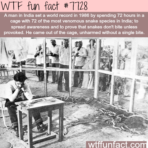 Man in India spends 72 hours in a cage with venomous snakes - WTF fun facts
