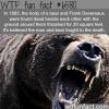 man vs bear fight wtf fun facts