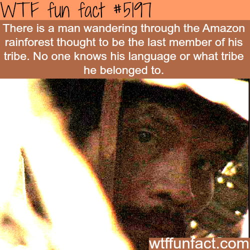 Man wandering through the Amazon rainforest - WTF fun facts