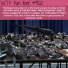manic enterprises wtf fun facts