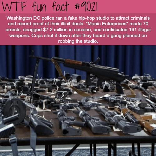 Manic Enterprises - WTF fun facts