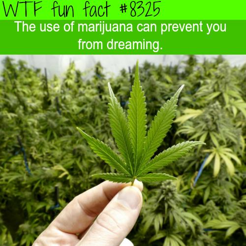 Marijuana can prevent you from dreaming - WTF fun facts