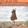 massive bird nest