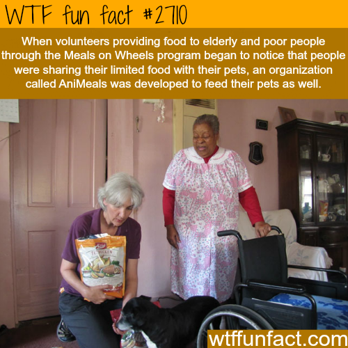 Meals on Wheels and Animeals - WTF fun facts