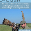 meerkat on a cameraman wtf fun fact