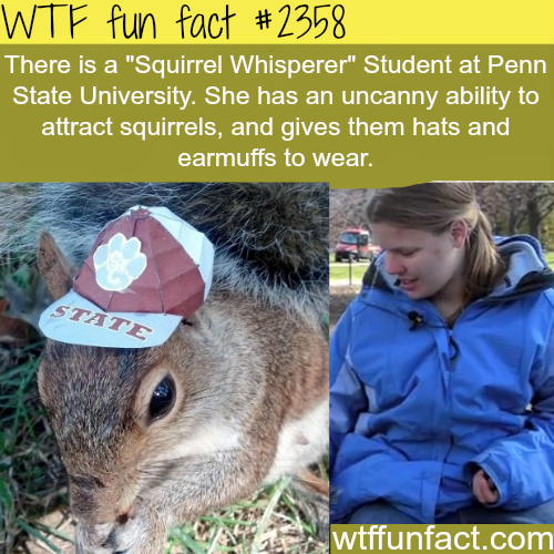 """Meet the """"Squirrel Whisperer"""" from Penn State -WTF funfacts"""