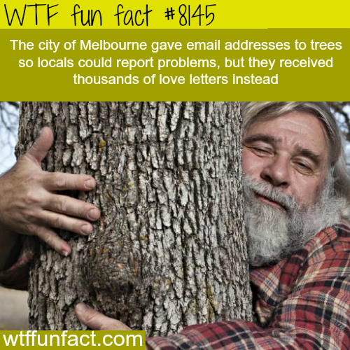 Melbourne locals keep sending love letters to trees - WTF fun fact